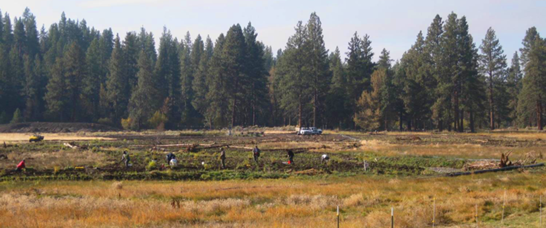 Habitat Restoration Services